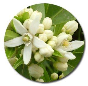 fioriarancio5381